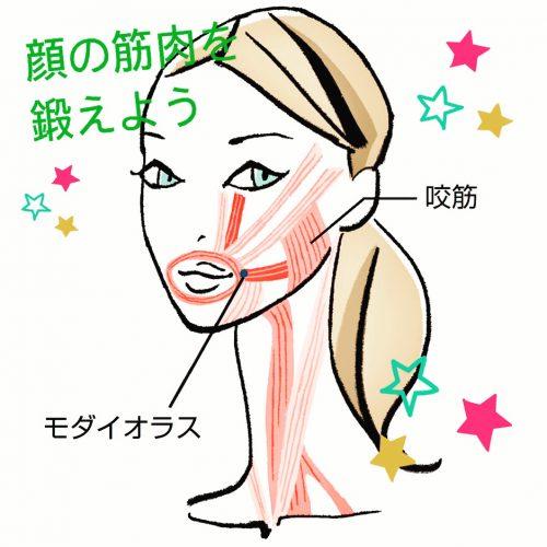 顔の筋肉を鍛えよう!