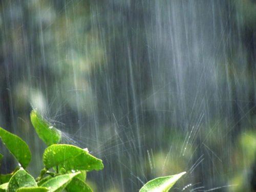 まだ雨の日が続きますね。